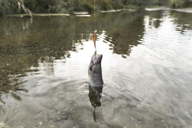 frisk fisk